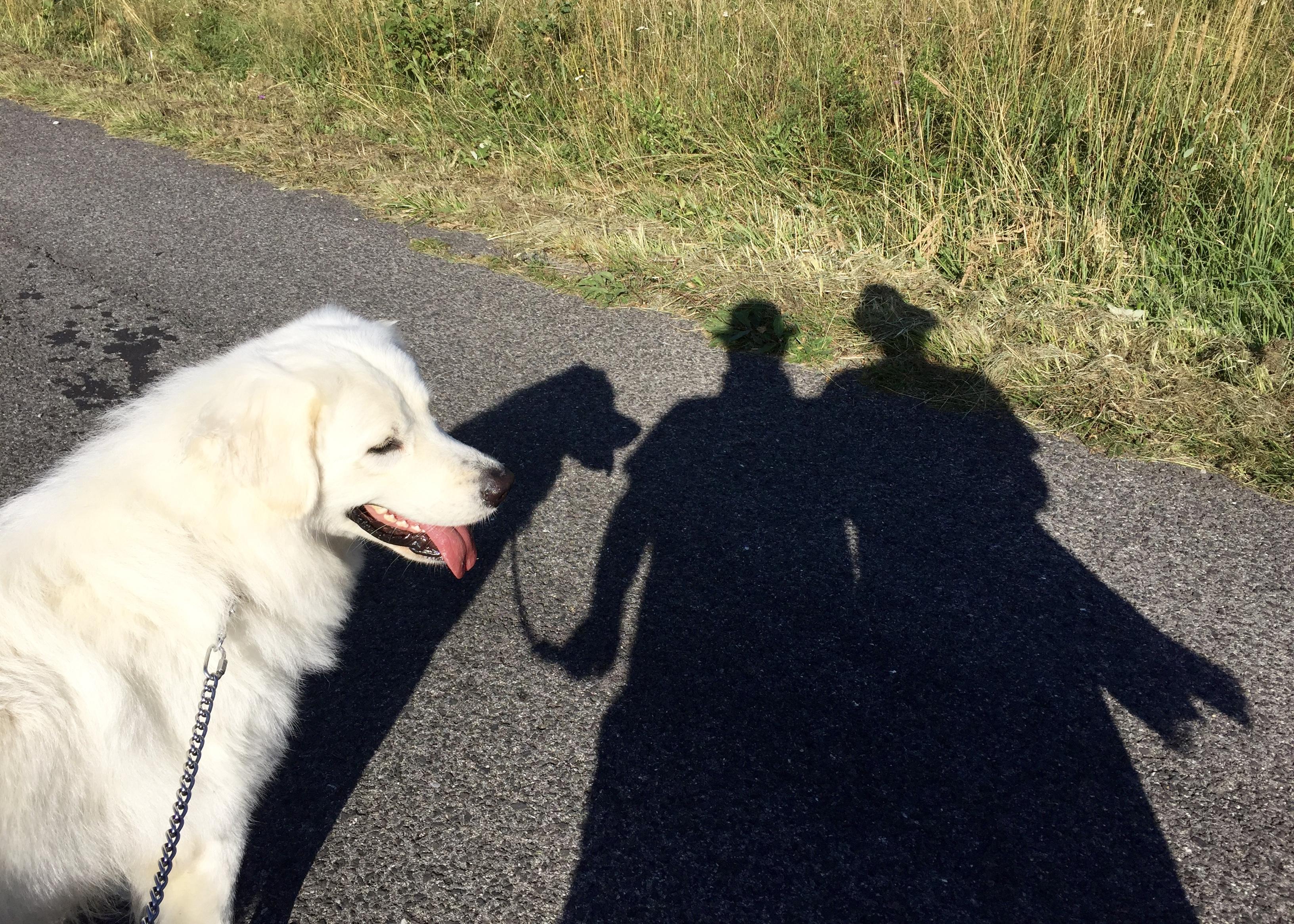 JAKI a jeho tieň